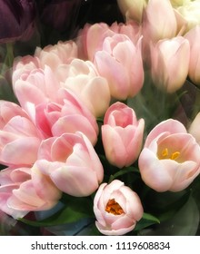 A Beautiful Bouquet of Pink Tulips