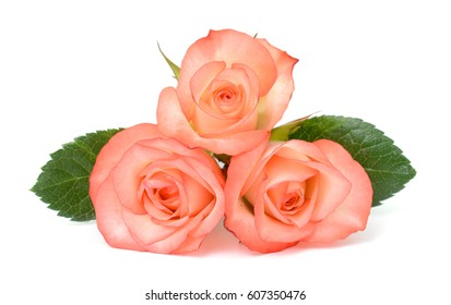 beautiful bouquet of rose flowers isolated on white background