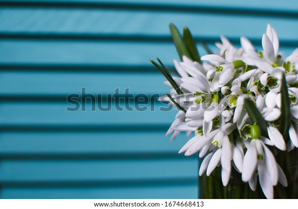 Beautiful bouquet of snowdrops flowers in the glass of water. Spring flowers.