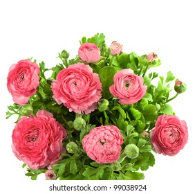 beautiful bouquet of spring flowers pink ranunculus on white background