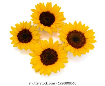 beautiful bouquet sunflower with leaves isolated on white background