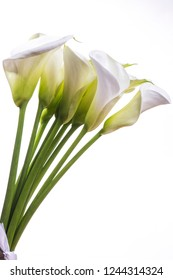 Beautiful bouquet of tender callas flowers on a white background with copy space.