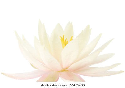 Beautiful bouquet of water lilies
