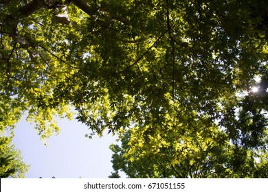 Beautiful branches with green leaves of several broadleaf trees with backlight from the sunny sky, shot on a sunny summer day in the Orto Botanico di Padova in padua in italy