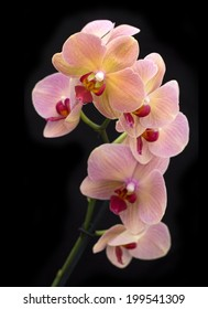Beautiful  brick red orchid in the pot on dark background. Top view