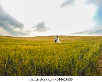 beautiful brides in field