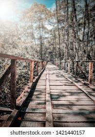 A beautiful bridge in the Sundarbans forest.