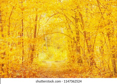 Beautiful bright autumn background. Yellow trees in enchanting forest. Autumn leaves fall from branches on sunny day. Sun shining. Orange foliage on ground. Golden trees in park. Enchanting landscape