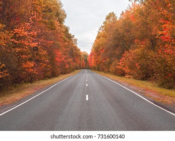 beautiful bright autumn road landscape. red leaves on the trees