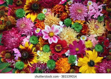 Beautiful bright background from garden of flowers, top view. Background for congratulations and postcards.