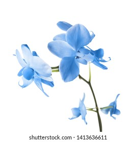 Beautiful bright blue orchid on white background