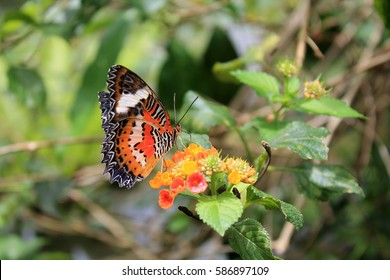 Beautiful bright butterfly on a flower
