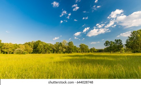 Beautiful bright landscape of grass field and green environment concept.