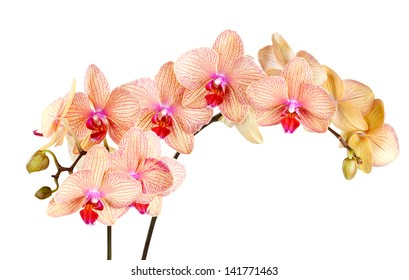 Beautiful, bright orchid on a white background