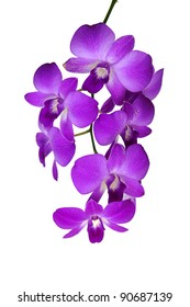 beautiful bright pink purple dendrobium orchid flower branch isolated on white