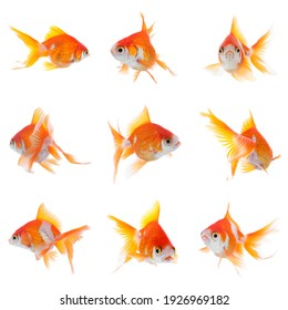 Beautiful bright small goldfish on white background, collage