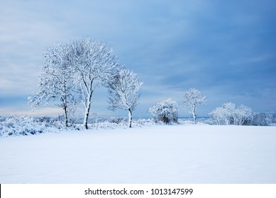 Beautiful and bright snow covered landscape at the swedish island Oland