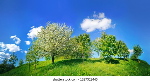Beautiful bright spring landscape with blooming trees on hill in Park on Sunny day against blue sky with clouds. Natural scene with Juicy young greens in nature.