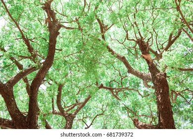 Beautiful The bright sun rays shining through branches of trees, wood landscape,Green nature background,Bright life concept.