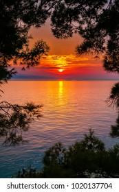 beautiful bright sunset above the sea, through pine trees, Croatia