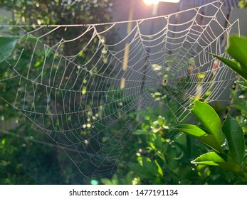 Beautiful bright transparent cobweb on branch trees in the garden, shining under the sunlight. Selective focus.