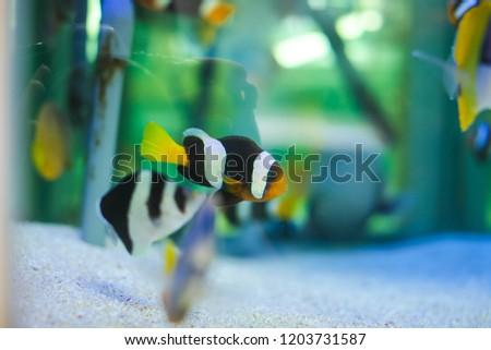 Beautiful Bright Tropical Fishes Aquarium Sale Stock Photo (Edit Now