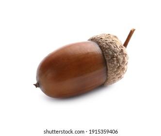 Beautiful brown acorn on white background. Oak nut