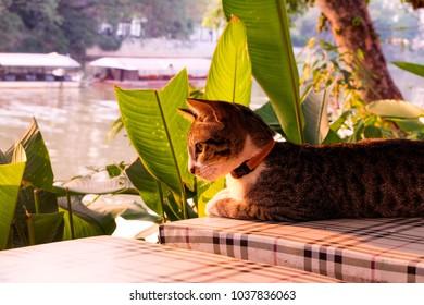 beautiful brown cat in the garden.