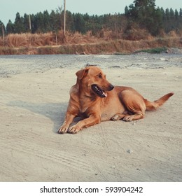 Beautiful brown dog sitting on the floor in the morning summer.