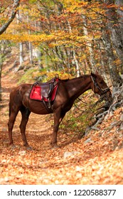 Beautiful brown horse in the autumn forest