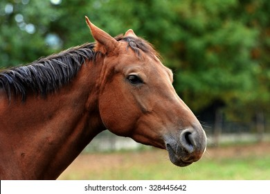 Beautiful brown horse head