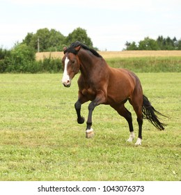 Beautiful brown horse jumping in freedom on the grass