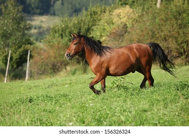 Beautiful brown horse running on pasturage in autumn