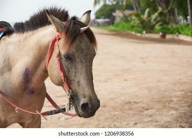 Beautiful brown horse with seashell on head mimicking unicorn on the beach