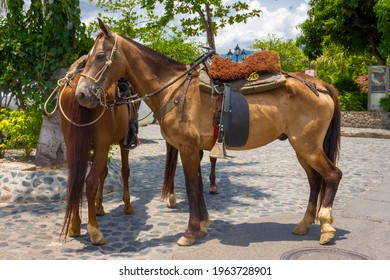 Beautiful brown horse in the street