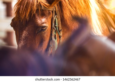 A beautiful brown horse in a white wooden cage with another horse, Closeup of a beautiful horse in captivity, Brown horse with lens flare, Lens flare.