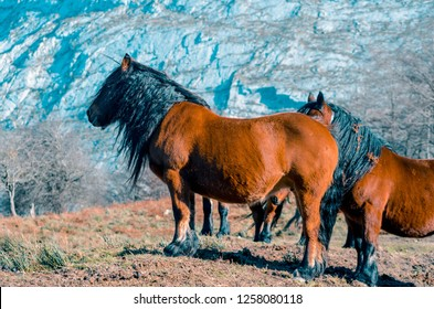 beautiful brown horses of Gorbea natural park. Basque Country, Spain