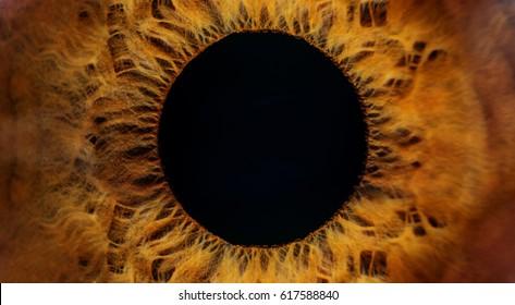 Beautiful brown human eye very close-up macro photography