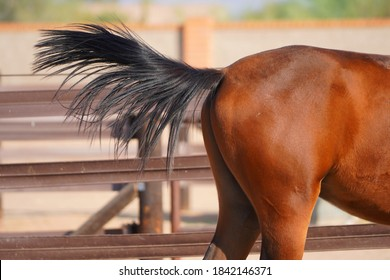 Beautiful brown red horse up for adoption at Healing Hearts Animals Rescue & Refuge in Arizona