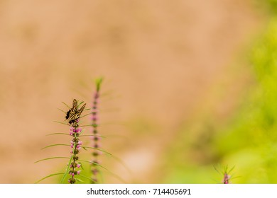 Beautiful brown and white butterfly perched on a plant with lilac flowers and green leaves.