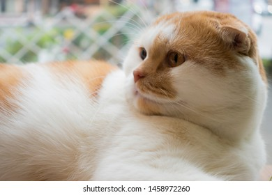 Cat Head On Human Body Images, Stock Photos & Vectors   Shutterstock