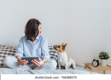 Beautiful brunette female in pyjamas sits on bed in bedroom with her jack russell terrier dog, holds tablet computer, enjoys morning weekend, watches video online, has good relationships with pet