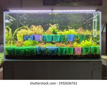 Beautiful bubbles of aquatic plants growing in the aquarium
