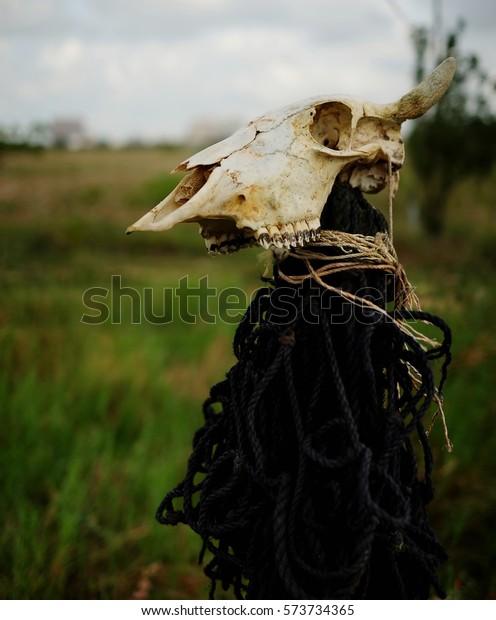 Beautiful Bull Skull Decorated Over Pole Stock Photo (Edit