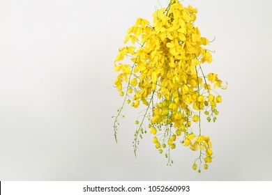 A beautiful bunch of Cassia Fistula (Kanikonna - A flower used to welcome the festival of Vishu - The new year of Kerala), 23rd March 2018, Kerala, India