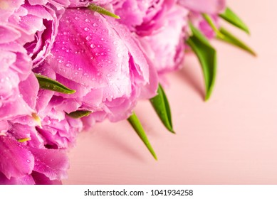 Beautiful Bunch of Peony Style Tulips on the Pink Background, spring holiday concept, copy space