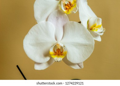 Beautiful bunch of white orchid, shot at close range, in its sma