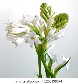 A beautiful bunch of white tuberose flowers with blooming buds. Tuberoses are very nice and scented flowers