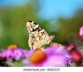 Beautiful butterflies on flowers