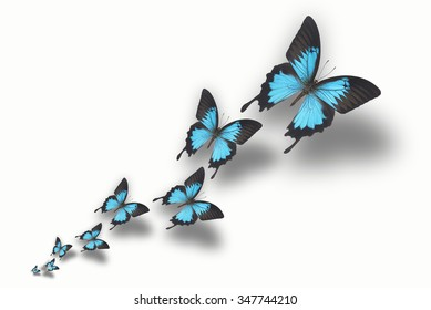 Beautiful butterflies on white background